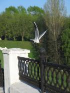 Полет чайки